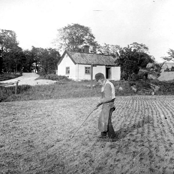 An old man with a stick on a field.